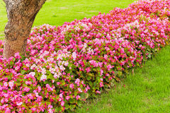 Flowers  line Royalty Free Stock Images