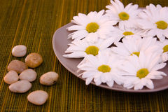 Flowers and little stones. On bamboo background Royalty Free Stock Image