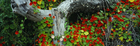 Flowers and log. In Northern California royalty free stock photography