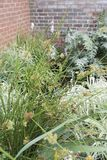 Flowers and long grass in an urban garden. With brick wall in background Stock Photos
