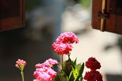 Flowers looking out a window Royalty Free Stock Images