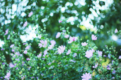 FLOWERS. Lot delicate pink flowers growing Stock Photo