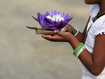 Flowers of a lotus in hands Stock Images