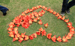Flowers and love. Kapok flowers like a heart on the lawn Stock Images