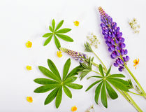 Flowers of a lupine and buttercup on white, the top view Royalty Free Stock Photo