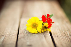 Flowers lying on a wooden bench Stock Photography