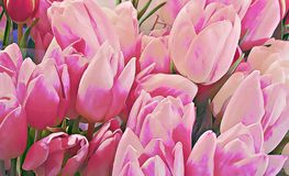 Flowers macro with painting, tulips. Royalty Free Stock Photo