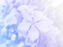 Flowers made with color filters. Beautiful flowers made with color filters Stock Images