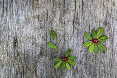 Flowers made of leaves and berries Stock Images