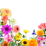 Flowers magic world Royalty Free Stock Images