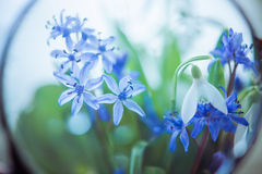 Flowers through magnifier Royalty Free Stock Photo