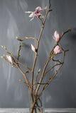 Flowers magnolia in glass vase. Magnolia stellata . Still life. Flowers magnolia in glass vase Magnolia stellata . Still life Royalty Free Stock Image