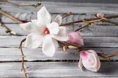 Flowers magnolia on wood table. Magnolia stellata . Still life. Flowers magnolia on wood table. Magnolia stellata . Still life Royalty Free Stock Photo