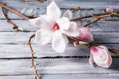 Flowers magnolia on wood table. Magnolia stellata . Still life. Flowers magnolia on wood table. Magnolia stellata . Still life Stock Images
