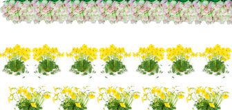 Flowers  making a border. Flowers roses and  oxalis (L. Oxalis lobata ) making a border Stock Photos