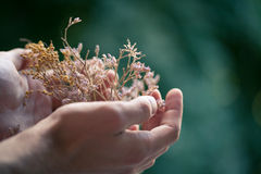Flowers male hand. Offer giving celebrating bouquet Note: Shallow depth of field royalty free stock image