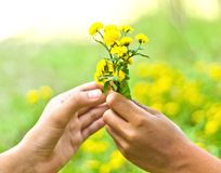 Flowers in the man hand Stock Photo