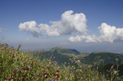 Flowers in the marche mountain Stock Photography