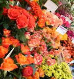 Flowers Market. Variety of fresh flowers at the flower's market in Munich, Germany Royalty Free Stock Image