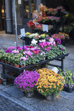 Flowers market Royalty Free Stock Photos