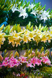 Flowers market Stock Image