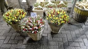 Tulips Flowers Market in Amsterdam on the Canals royalty free stock images