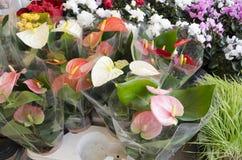 Flowers in market. Beautiful flowers in market , Europe , Mediterranean,  crete , Greece Royalty Free Stock Images