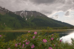 Flowers in Marsh with Snow-Capped Mountains Stock Photo