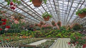 Flowers in Matsue Vogel Park Stock Image