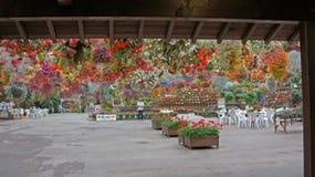 Flowers in Matsue Vogel Park Stock Photo