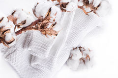 Flowers mature cotton Royalty Free Stock Photography