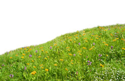 Flowers  meadow Stock Photography
