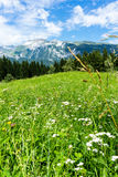 Flowers in meadow alps landscape in summer hiking weather Stock Images
