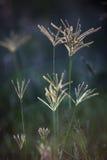 Flowers in a meadow. Flowers backlit  in a meadow Stock Image