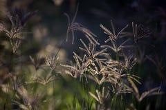 Flowers in a meadow. Flowers backlit  in a meadow Royalty Free Stock Photo