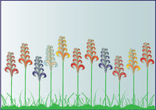 Flowers on the meadow. Colorful flowers on the meadow Stock Photography