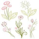 Flowers, meadow Stock Photo