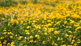 Flowers on Meadow Stock Images