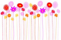 Flowers - meadow. Meadow full of colorful flowers Royalty Free Stock Photography