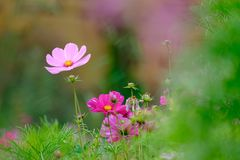 Flowers on a meadow in Aalen stock photography