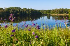 Flowers on the meadow by the lake Royalty Free Stock Images