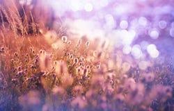 Flowers meadow Stock Image