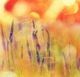 Flowers meadow Royalty Free Stock Photos