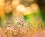 Flowers meadow Royalty Free Stock Image