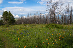 Flowers meadow mountains dry trees Stock Photos
