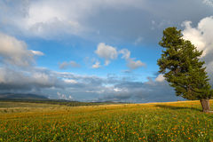 Flowers meadow mountains sky Royalty Free Stock Image