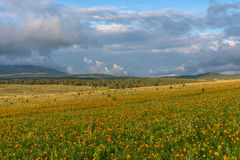 Flowers meadow mountains sky Royalty Free Stock Photo