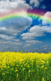 Flowers meadow and rainbow Stock Image