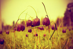 Flowers in the meadow, selective focus vintage toned Stock Photography
