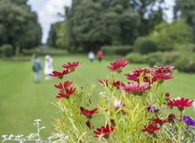 Flowers and the meadows. This image shows some flowers and meadows. It was taken at the Kew Gardens in London Royalty Free Stock Photography